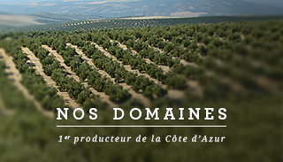 Our domains : 1st producer of Alpes-Maritimes